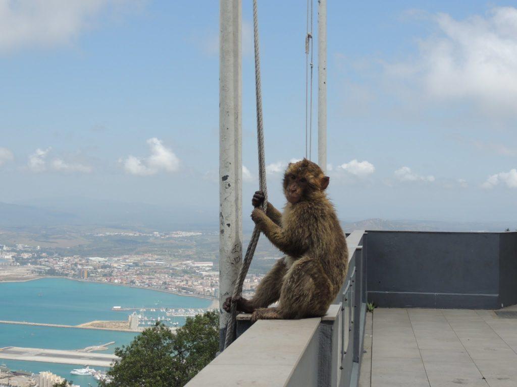 I macachi di Gibilterra