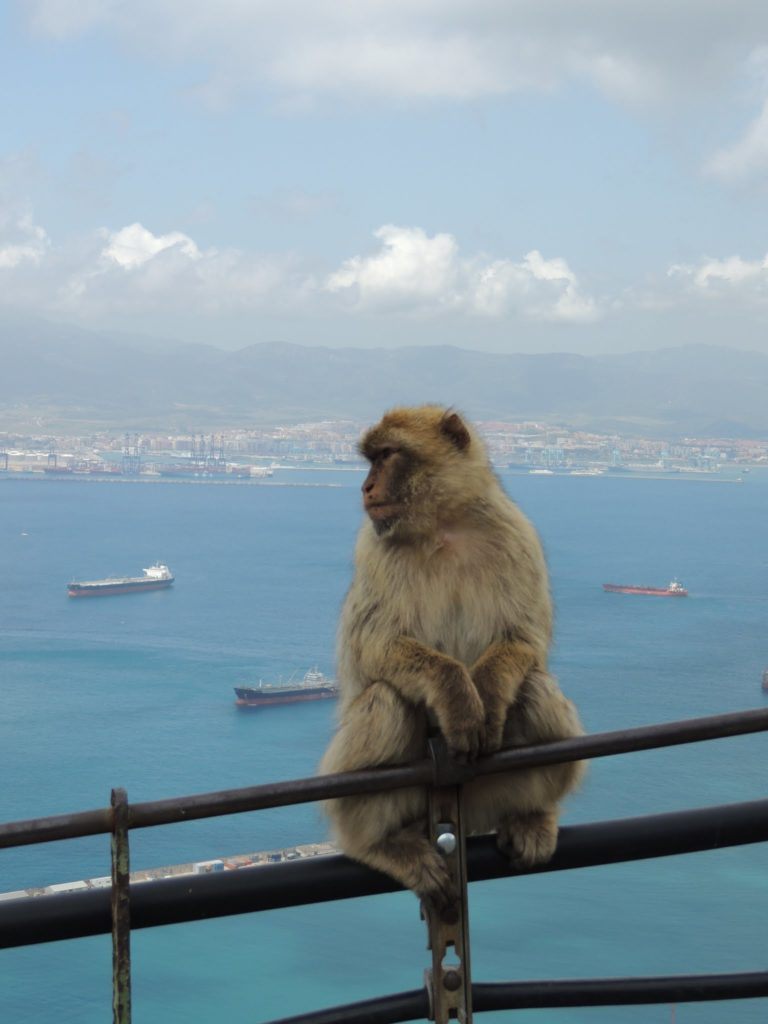 Cosa vedere a Gibilterra: i macachi