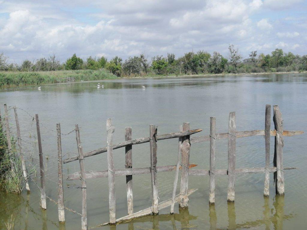 Marais de Vigueirat Itinerario in Camargue